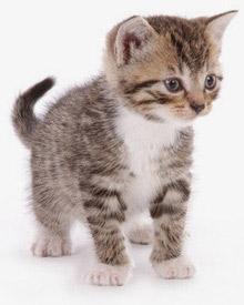 Биохимический анализ крови кошка петербург Справка от фтизиатра Шаболовская