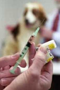 Прививка для собаки от чумки - 2b
