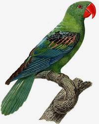 Врач орнитолог лечение птиц на дому