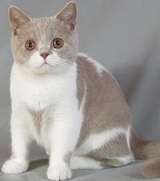 насморк у кошки доксициклин