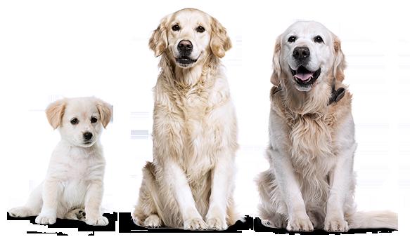 можно ли кастрировать собаку в 7 лет